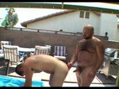 Bears in Heat