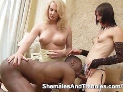 Blowjob and rimming session with two shemales